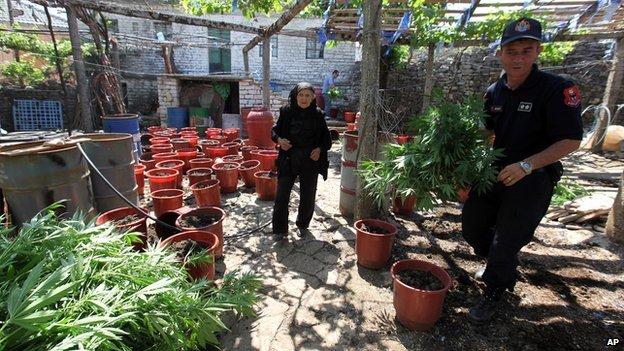 Αλβανική οθόνη αστυνομικούς κατασχέθηκαν μαριχουάνα στην άνομη χωριό Λαζαράτ στις 20 Ιουνίου, 2014