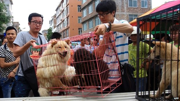 Animal protection activists put cages with dogs they freed from dog sellers on to a truck in Yulin - 20 June 2014