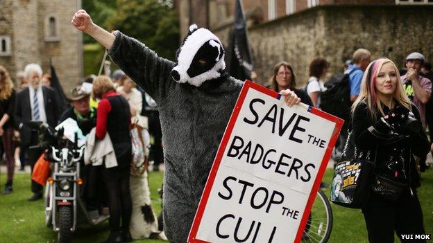 Badger protests