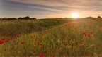 Yellow sun beaming in the background, over a lush green field with bursting with red poppies. The sky is pale, with large amounts of white cloud spreading across the top of the photo.