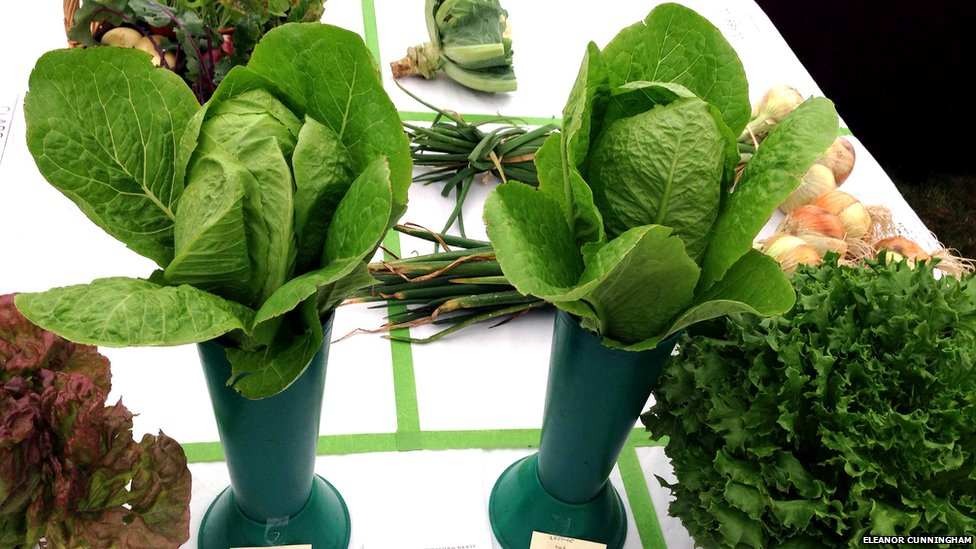 two lettuces in the food section