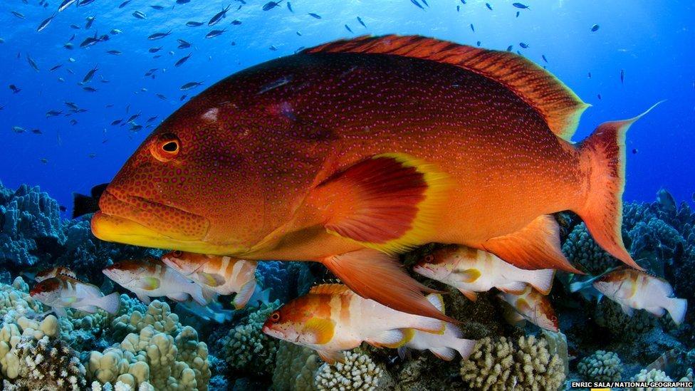 Pitcairn fish
