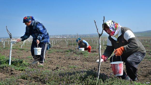 Moldovan women planting trees in Comrat, Gagauzia