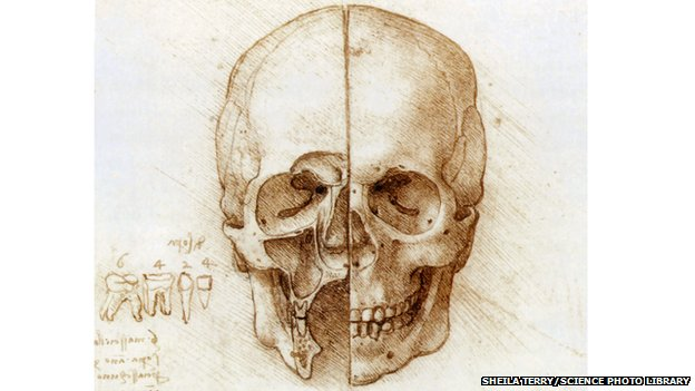 Skull anatomy drawing by Leonardo da Vinci
