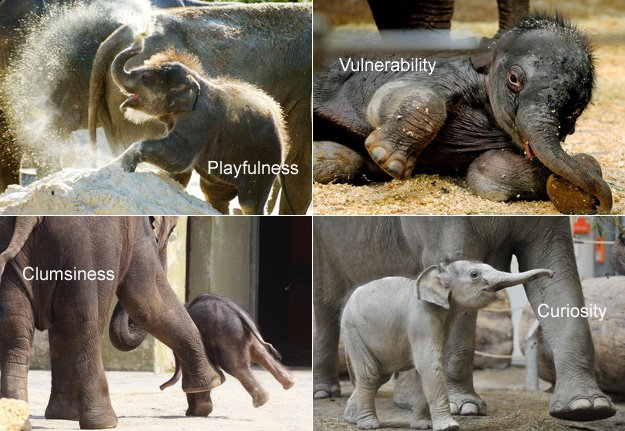 The gallery for --> Animals Giving Birth To Human Babies