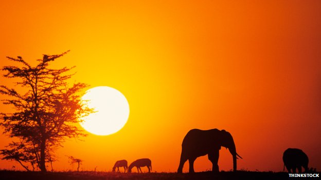 Elephants silhouetted in Kenya