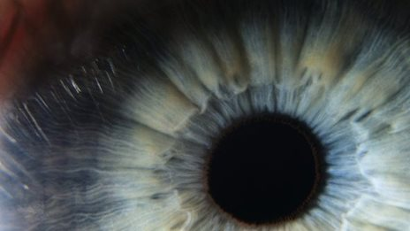 'Human corneas re-grown in mice'