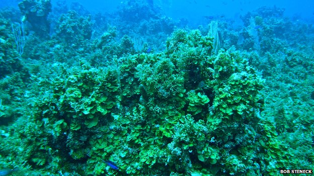 Reef overrun with algae