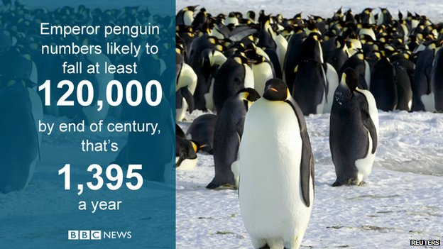 Scientists say climate change likely to affect Antarctica's emperor penguins
