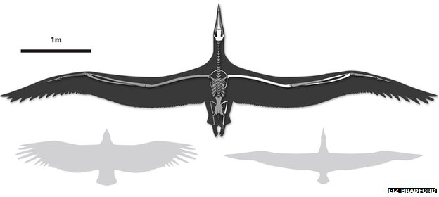 Giant bird's fossil identified