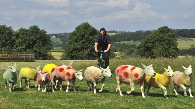 Sheep painted in Tour de France colours