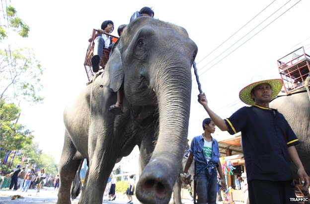 Worries over 'cruel' elephant trade