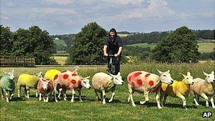 tour coloured sheep