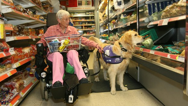 Canine partners dog getting broccoli for its owner in the supermarket. She is in a wheelchair