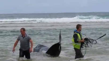 Local men help the whales back out to sea