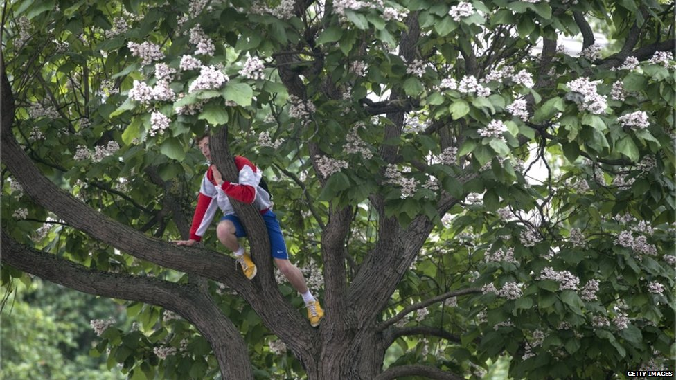 A man in a tree in Parliament Square