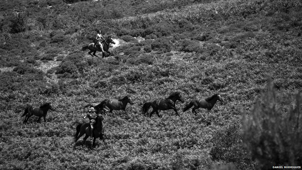 Together riders help to gather the horses