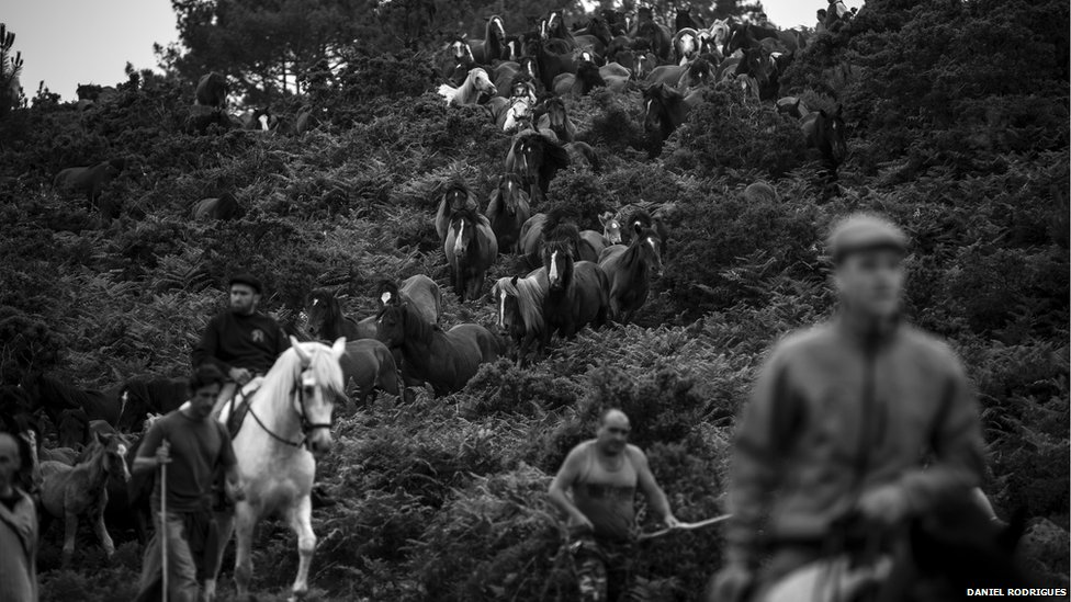 The horses are taken to the village of Sabucedo