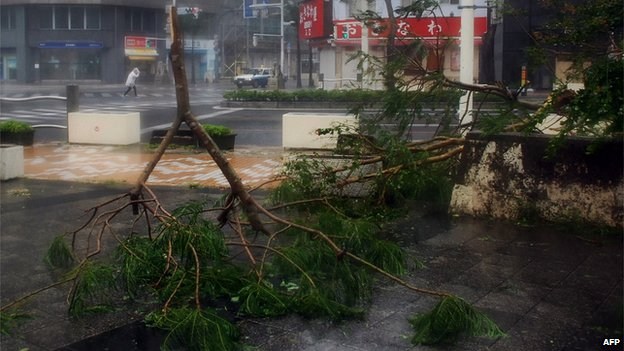 Trees have collapsed by strong wind on a street at Naha in Japan's southern island of Okinawa on 8 July, 2014