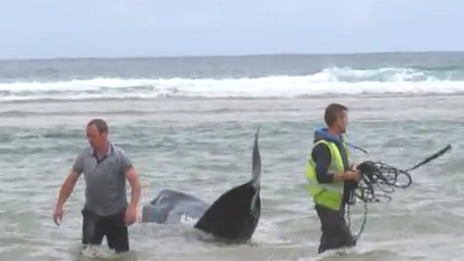 Kevin Coyle and Pat O Grady try to help the whales