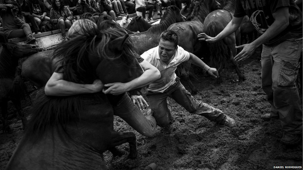Horses are vaccinated at the round-up