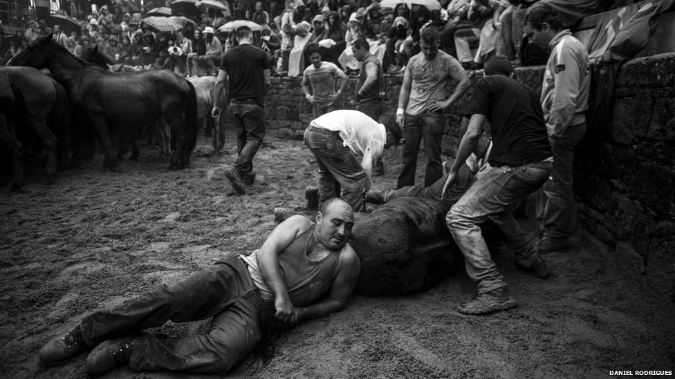 The horses' manes and tails are cut by a team of four people