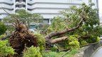 "A large tree uprooted on a pedestrian road in Naha, Japan""s southern island of Okina"