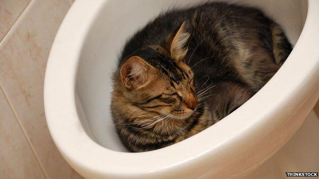 cat in bidet