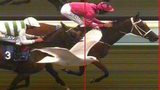 Seagull appears in photo finish at Brighton