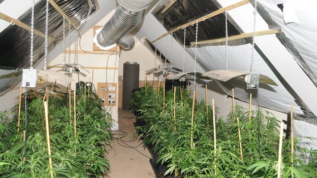 Salford cannabis farm