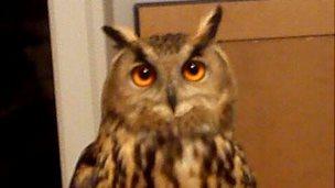 Sam the Eagle Owl