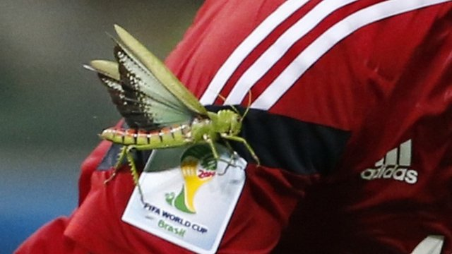 Grasshopper on James Rodriguez's arm