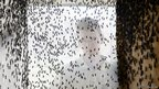 A visitor stands behind an encasement of flies at the AgriProtein project farm near Cape Town