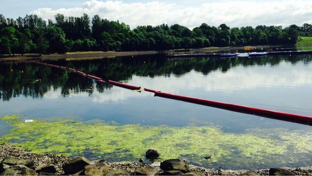 algae at strathclyde park