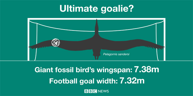 Giant bird turns goalkeeper