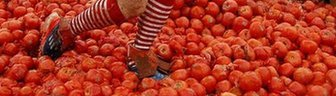Close up of tomatoes and legs