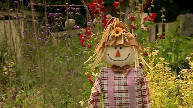 Scarecrow in allotment
