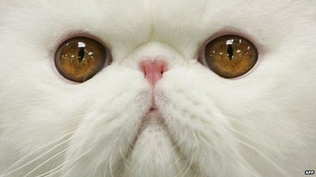 Close up of white cat