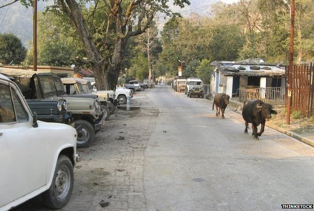 Cattle in Rikishesh, India