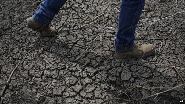 A farmer walks across the dried-up ditch at his rice farm in Richvale, California (May 2014)