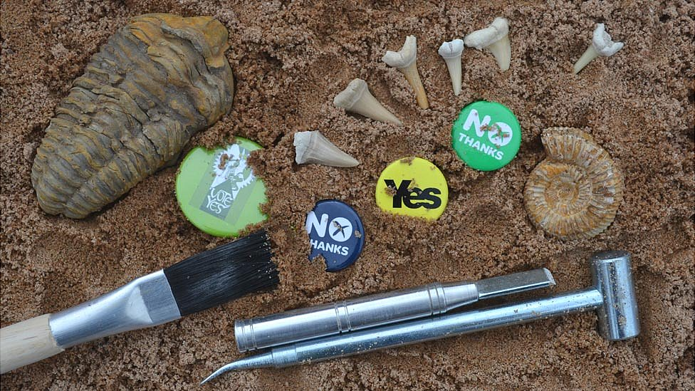 Fossils and badges