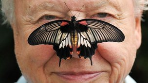 Butterfly on David Attenborough's face