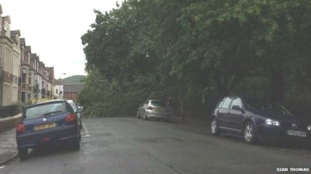 Tree down in Victoria Park Road East, Cardiff