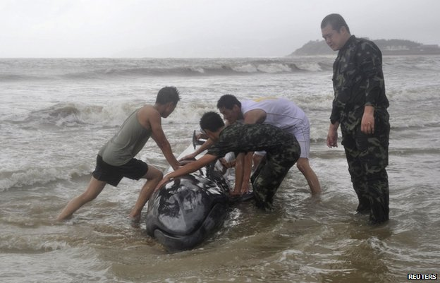 Paramilitary policemen try to help a stranded whale back into the ocean as Typhoon Rammasun hits Yangjiang, Guangdong province, 19 July