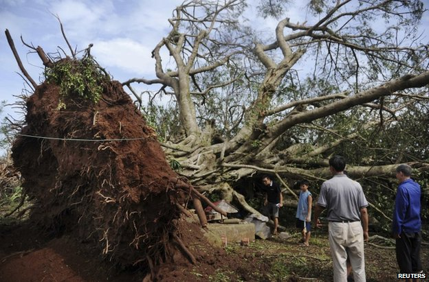 An uprooted tree in Zhanjiang, in China's Guangdong province, 19 July