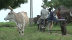 VIDEO: Senegal farmers get cow tracker tech
