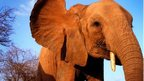 Elephant Diaries - BBC