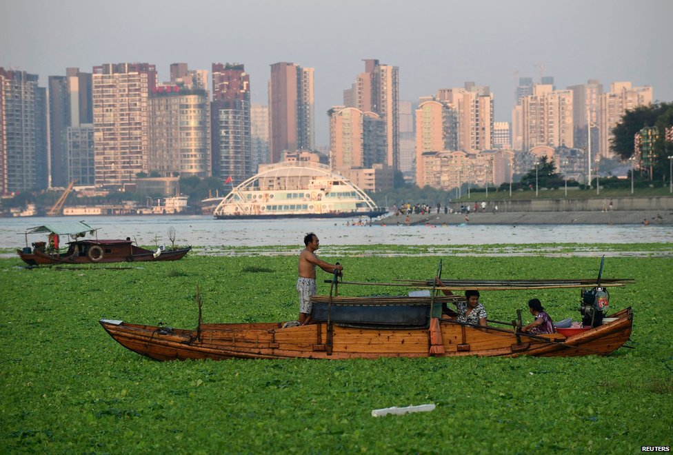 A fisherman and his family are seen on a section of algae-covered river, in Wuhan, Hubei province, China