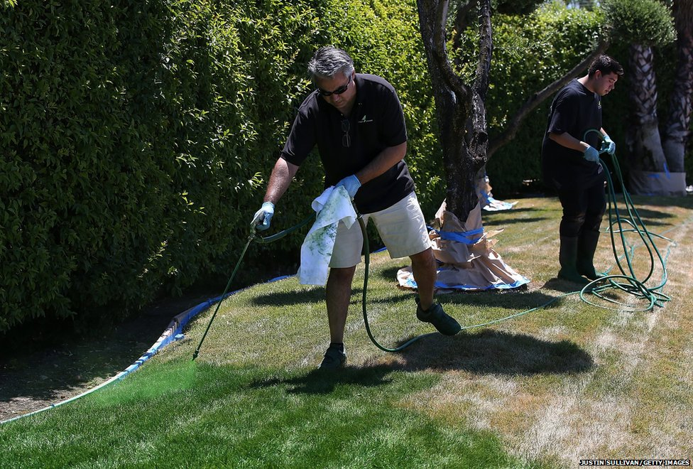 Shawn Sahbari of Green Canary sprays green water-based paint on a partially dead lawn at the Almaden Valley Athletic Club in San Jose, California.