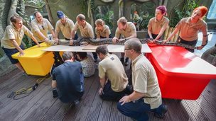 Giant reticulated python is being checked by 12 zookeepers and vets